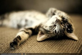 Cyoot Kitteh of teh Day: Reddy 2 Relax on Caturday!