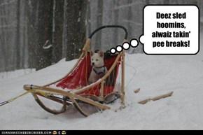 Deez sled hoomins, alwaiz takin' pee breaks!