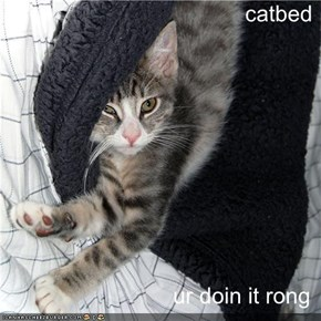 catbed  ur doin it rong