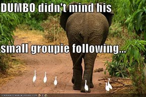 DUMBO didn't mind his  small groupie following...