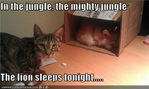 In the jungle, the mighty jungle  The lion sleeps tonight.....