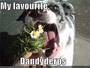 My favourite,  Dandyderps