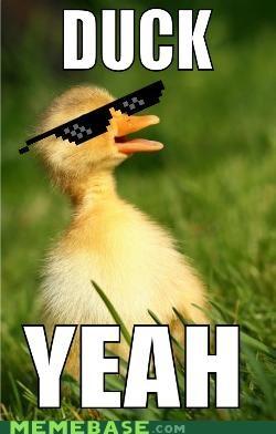 Duck Yeah!
