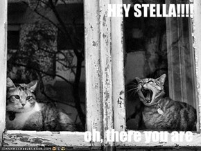 HEY STELLA!!!!  oh, there you are