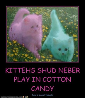 KITTEHS SHUD NEBER PLAY IN COTTON CANDY