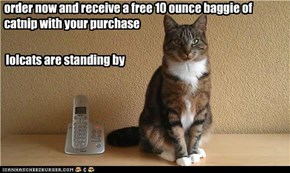 order now and receive a free 10 ounce baggie of catnip with your purchase