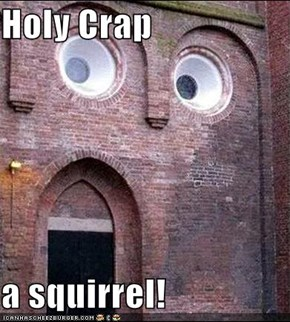 Holy Crap  a squirrel!