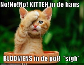 No!No!No! KITTEH in de haus  BLOOMENS in de pot!  *sigh*