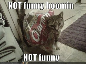 NOT funny hoomin  NOT funny