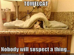 TOWELCAT