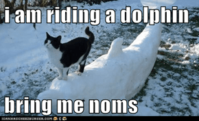 i am riding a dolphin  bring me noms