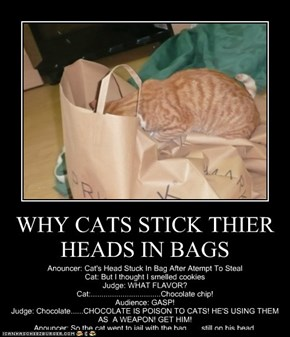 WHY CATS STICK THIER HEADS IN BAGS