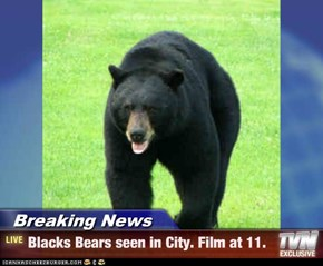 Breaking News - Blacks Bears seen in City. Film at 11.