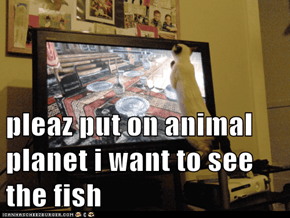 pleaz put on animal planet i want to see the fish