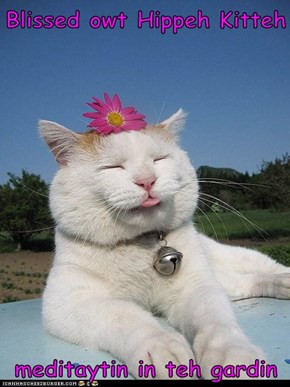 Blissed owt Hippeh Kitteh  meditaytin in teh gardin