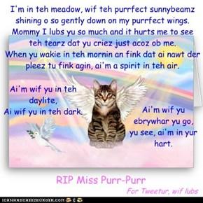 RIP Miss Purr-Purr