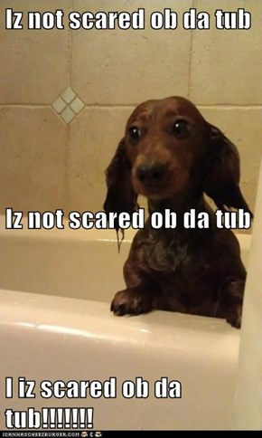 Iz not scared ob da tub Iz not scared ob da tub I iz scared ob da tub!!!!!!!
