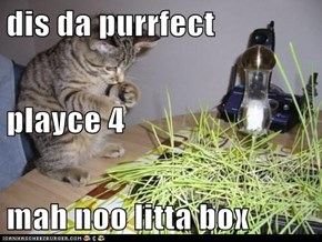 dis da purrfect playce 4 mah noo litta box