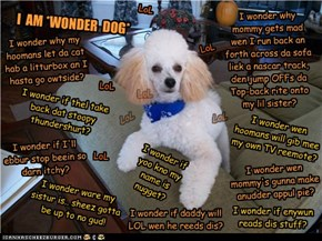 I  AM *WONDER  DOG*