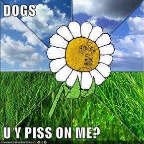 DOGS  U Y PISS ON ME?