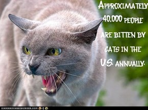 Fun Cat Facts #6