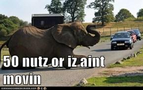 50 nutz or iz aint movin