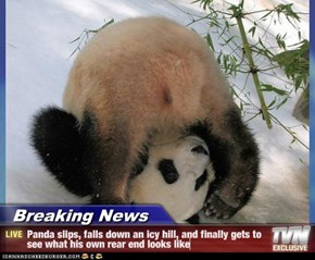 Breaking News - Panda slips, falls down an icy hill, and finally gets to see what his own rear end looks like