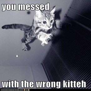 you messed  with the wrong kitteh