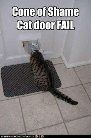 Cone of ShameCat door FAIL