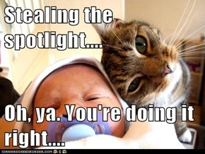 Stealing the spotlight....  Oh, ya. You're doing it right....