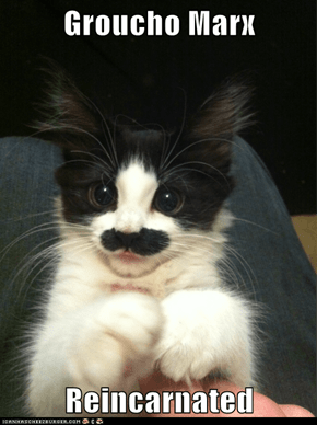 Groucho Marx   Reincarnated