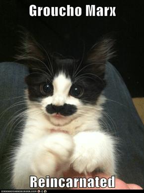 Groucho Marx   Reincarnated
