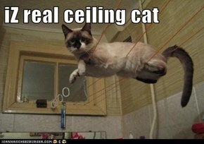 iZ real ceiling cat