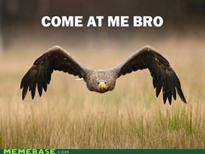 Bro Birds