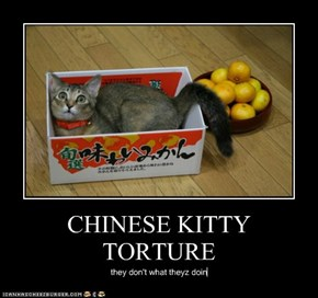 CHINESE KITTY TORTURE