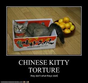 CHINESE KITTY TORTURE