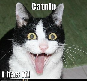 Catnip   i has it!
