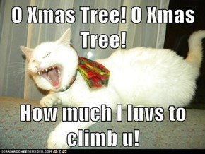 O Xmas Tree! O Xmas Tree!  How much I luvs to climb u!