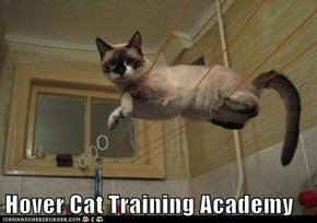 Hover Cat Training Academy