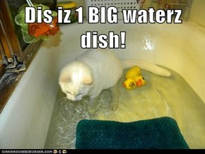 Dis iz 1 BIG waterz dish!