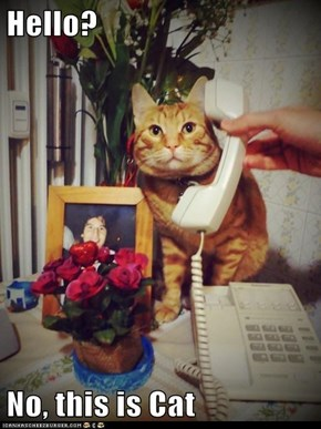 Hello?  No, this is Cat