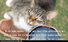 Fun Cat Facts #10