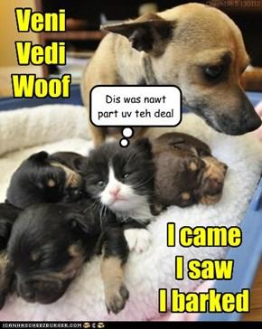 Veni  Vedi Woof