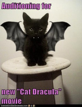 "Auditioning for  new ""Cat Dracula"" movie"