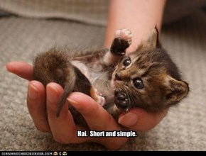 Hai.  I comes with three other kittens.