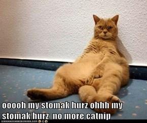 ooooh my stomak hurz ohhh my stomak hurz  no more catnip