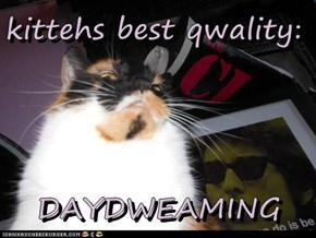 kittehs best qwality:  DAYDWEAMING