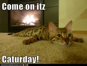 Come on itz  Caturday!