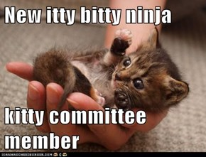 New itty bitty ninja   kitty committee member