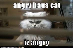 angry baus cat  iz angry